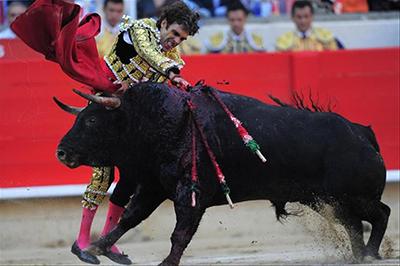 Ein Matador sticht mit dem Degen in den Nacken des Stieres.